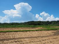 盛夏 - 南風のデジタル写真日記