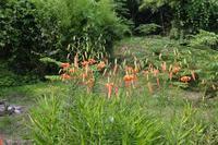 オニユリの花も咲きました - 栗駒山の里だより