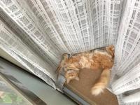 明るくて涼しいとこが好きな猫と、暗くて暖かいとこ好きな猫 - Lucky★Dip666-Ⅳ