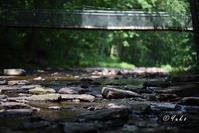 吊り橋 / suspension bridge - Seeking Light - 光を探して。。。