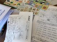 カラタチ - 風路のこぶちさわ日記
