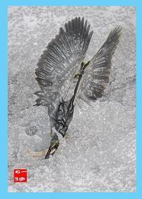 川も増水して風もあり魚も動きありササゴイには条件が良好! - Weblog : ちー3歩 Ⅱ