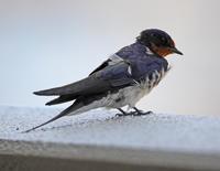 玄関あけたら・・・。 - 季節の野鳥~Wildbirds archives