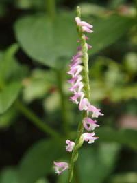 繊細な花たちも - 標高1,100メートルの悦楽