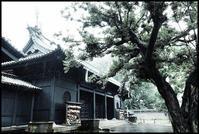 湯島 -23 - Camellia-shige Gallery 2