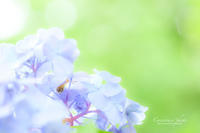 **雨ポツリ** - こころいろ*photo