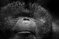 ボルネオ - 動物園の住人たち写真展(はなけもの写眞店)