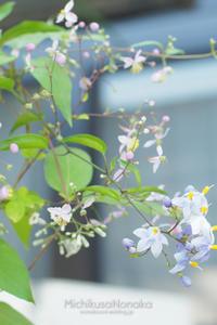 残念な花、増殖中 - みちくさのなか
