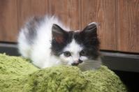 子猫 - ネコと裏山日記