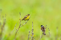 想い出II - 趣味の野鳥撮影