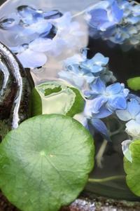 名残の紫陽花 - 赤煉瓦洋館の雅茶子