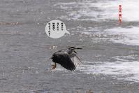 にわか雨でまた増水していた! - Weblog : ちー3歩 Ⅱ