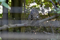 夏のタヤ - 動物園へ行こう