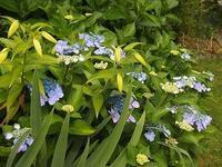 暑いけれど庭の植物は元気 - 北緯44度の雑記帳