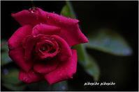 バラ色の人生 - 今が一番