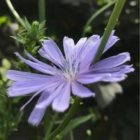 ハーブの収穫が嬉しい季節 - Bleu Belle Fleur☆ブルーベルフルール