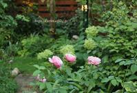 夕暮れの庭を彩るシャントロゼミサト台湾スィーツ - miyorinの秘密のお庭