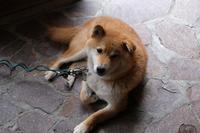 秘湯「日光澤温泉」の看板犬 - お山遊び