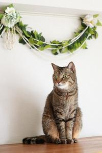 お花の前でポーズをとる猫 - きょうだい猫と仲良し暮らし