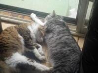 我が家の猫 - 日頃の思いと生理学・病理学的考察