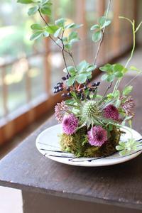 丹波焼雅峰窯の器に苔玉つくり - じばさんele