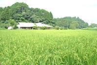 8月だよ!全員集合 - 千葉県いすみ環境と文化のさとセンター