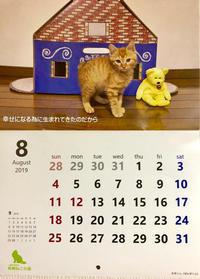 今日から8月 - 猫多摩散歩日記 2
