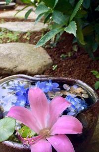 浮かべて花遊び - 赤煉瓦洋館の雅茶子