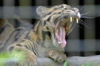 お口拝見 - 動物園へ行こう