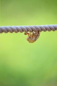 蝉の抜け殻 - 平凡な日々の中で