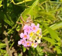 蝉花籠… - 侘助つれづれ