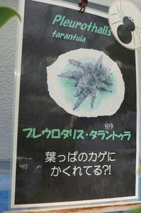 面白いランの花☆神代植物公園 - さんじゃらっと☆blog2