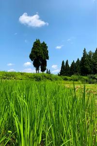 盛夏 - 松之山の四季2