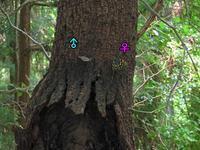 オオムラサキの求愛 - 秩父の蝶