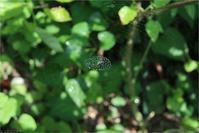 クモの巣 - トコトコブログ