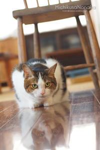 床に映る猫 - みちくさのなか