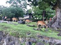 黄昏時の興福寺猿沢池界隈 - 笑わせるなよ泣けるじゃないか2