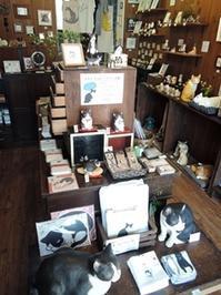 8月は『Viva!ハチワレ月間』 - 湘南藤沢 猫ものの店と小さなギャラリー  山猫屋