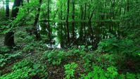 緑に咽る・・・赤城自然園・みずすましの池 - 『私のデジタル写真眼』