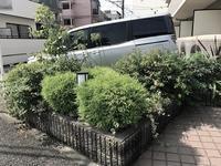 マンション植え込みのお手入れ - 緑のしずく (ベランダガーデン便り)