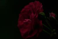 Red(3cut) -     ~風に乗って~    Present