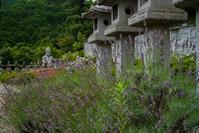 ラベンダーの咲く寺~壷阪寺 - 鏡花水月