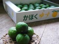 香り高き柚子(ゆず)令和元年の青柚子は9月中旬より出荷予定!今のうち青唐辛子を購入しておいて下さい - FLCパートナーズストア