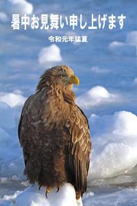 ♪しょちゅう~おみまいもうしあげ~ます。 - 季節の野鳥~Wildbirds archives