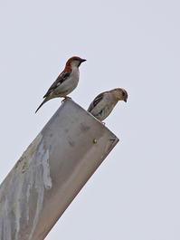 鉄壁の住宅。 - 季節の野鳥~Wildbirds archives