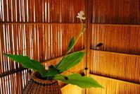 桂籠 - 懐石椿亭 公式weblog北陸富山の懐石料理屋