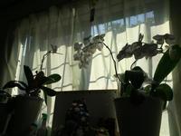 家の花:蘭 - (鳥撮)ハタ坊:PENTAX k-3、k-5で撮った写真を載せていきますので、ヨロシクですm(_ _)m