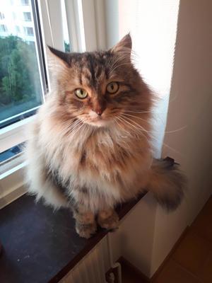 猫のルドルフ、お引越し - 広島もみじの冒険日誌 in Sweden