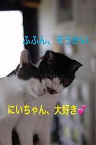 にゃんこ劇場「逃げろ!」 - ゆきなそう  猫とガーデニングの日記