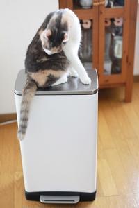 お気に入りのゴミ箱を見つける - きょうだい猫と仲良し暮らし
